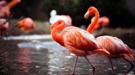 4K Flamingo Wallpaper For Desktop