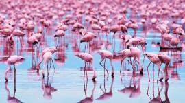 4K Flamingo Wallpaper Free