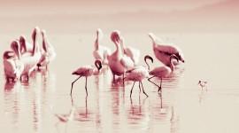4K Flamingo Wallpaper Full HD