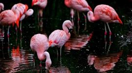 4K Flamingo Wallpaper Gallery
