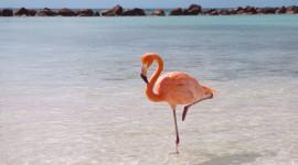 4K Flamingo Wallpaper HQ#2