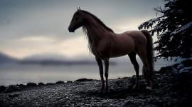 4K Horses Photo