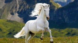 4K Horses Photo Download