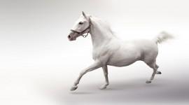 4K Horses Photo Free#2