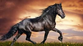 4K Horses Wallpaper