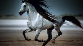 4K Horses Wallpaper Download