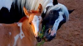 4K Horses Wallpaper Free