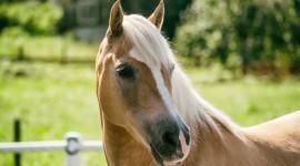 4K Horses Wallpaper Full HD
