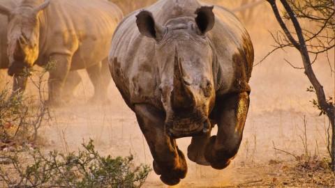 4K Rhino wallpapers high quality