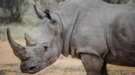 4K Rhino Photo