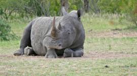 4K Rhino Photo Free