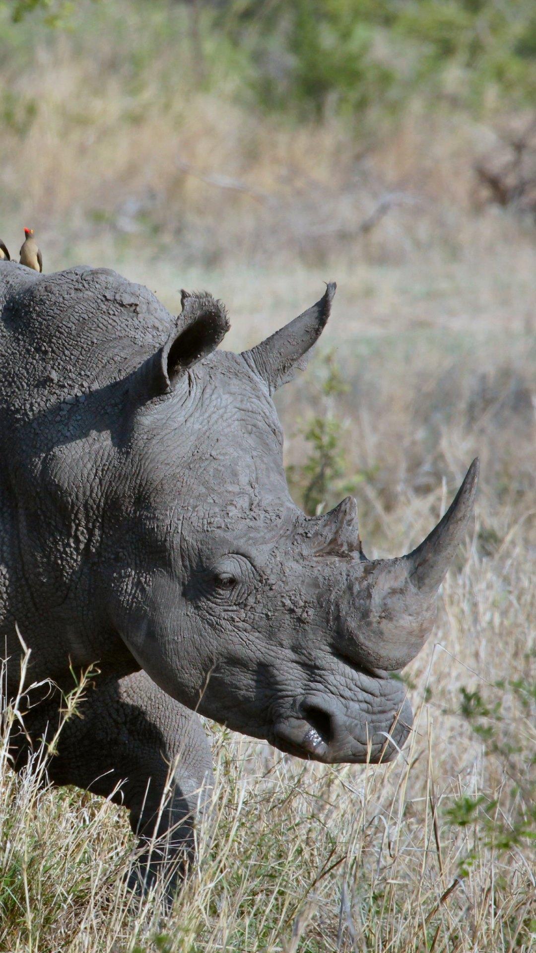 rhino mac crack high sierra