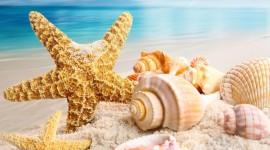 4K Starfish Desktop Wallpaper For PC
