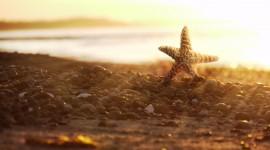 4K Starfish Desktop Wallpaper HD