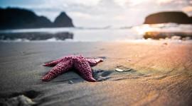 4K Starfish Photo