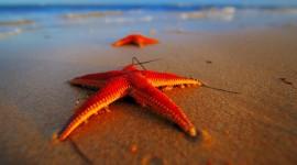 4K Starfish Photo Free