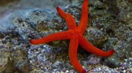 4K Starfish Photo Free#1