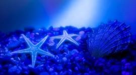 4K Starfish Photo#1