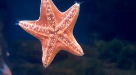 4K Starfish Photo#2