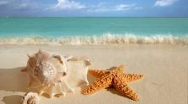 4K Starfish Photo#3