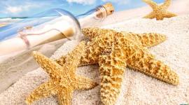 4K Starfish Wallpaper 1080p#1