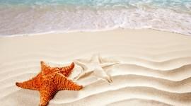 4K Starfish Wallpaper