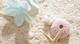 4K Starfish Wallpaper Download Free