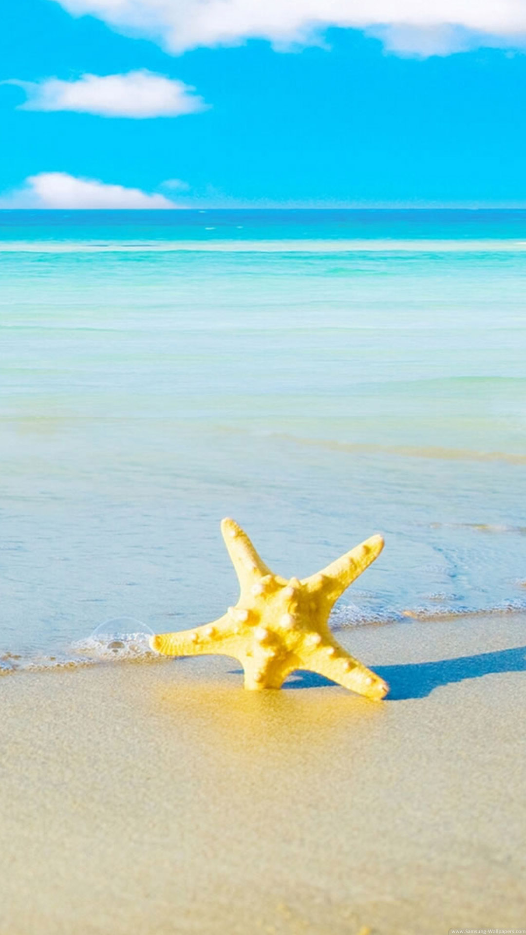4K Starfish Wallpapers High Quality | Download Free