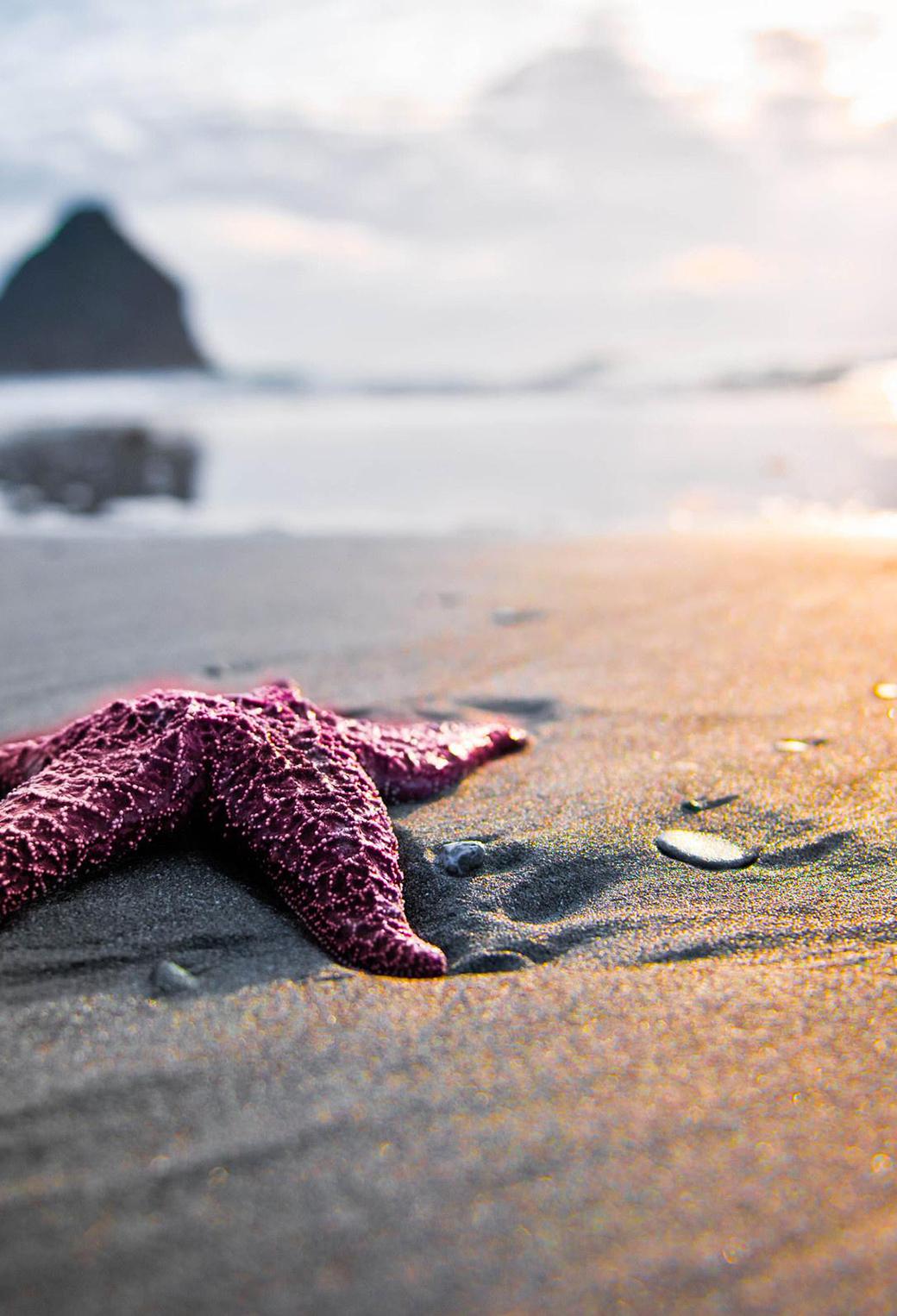 Starfish Background Iphone