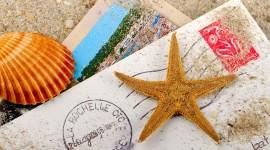 4K Starfish Wallpaper Free