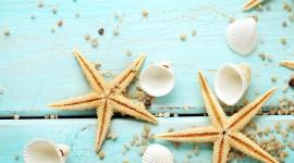 4K Starfish Wallpaper Full HD