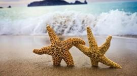 4K Starfish Wallpaper Full HD#1