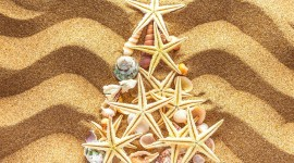 4K Starfish Wallpaper Gallery