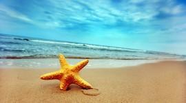 4K Starfish Wallpaper HQ