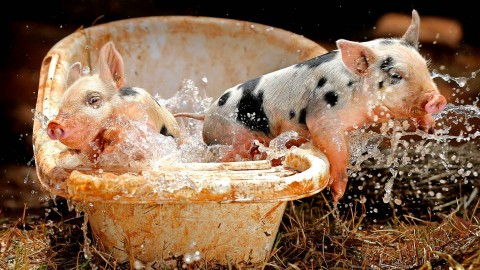Animals Baths wallpapers high quality