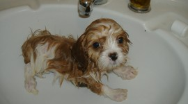 Animals Baths Photo Free