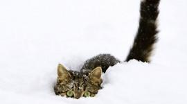 Animals In Winter Desktop Wallpaper