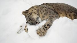 Animals In Winter Desktop Wallpaper For PC