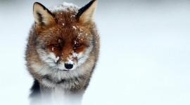 Animals In Winter Desktop Wallpaper HD