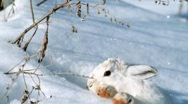Animals In Winter Desktop Wallpaper#1