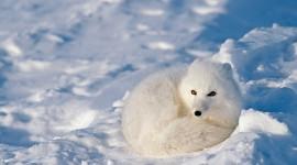 Animals In Winter Desktop Wallpaper#2