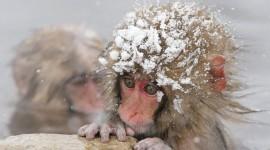 Animals In Winter Photo
