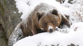 Animals In Winter Photo Download