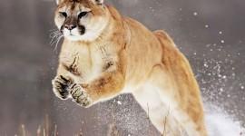 Animals In Winter Photo Download#1