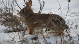Animals In Winter Photo Free#1