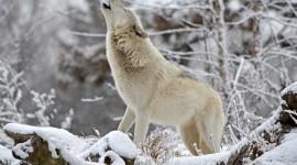 Animals In Winter Photo#1
