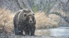 Animals In Winter Photo#2