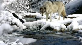 Animals In Winter Photo#3
