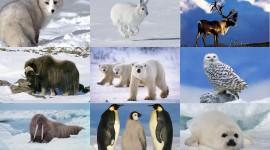 Animals In Winter Pics