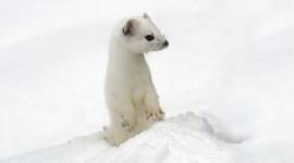 Animals In Winter Wallpaper 1080p